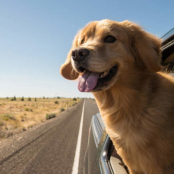 The Real Reason Why Dogs Stick Their Heads Out of Car Windows