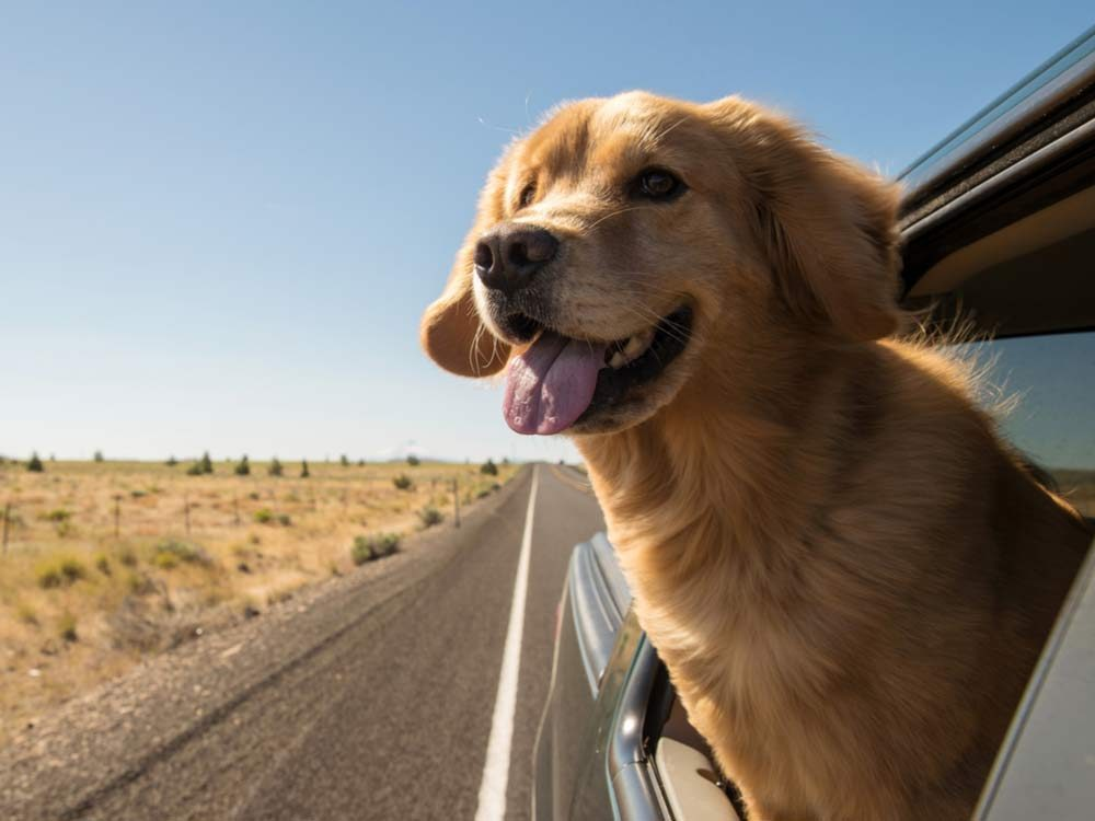 What Is The Best Dog Food In Canada