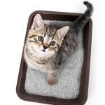 5 Things To Do with Kitty Litter