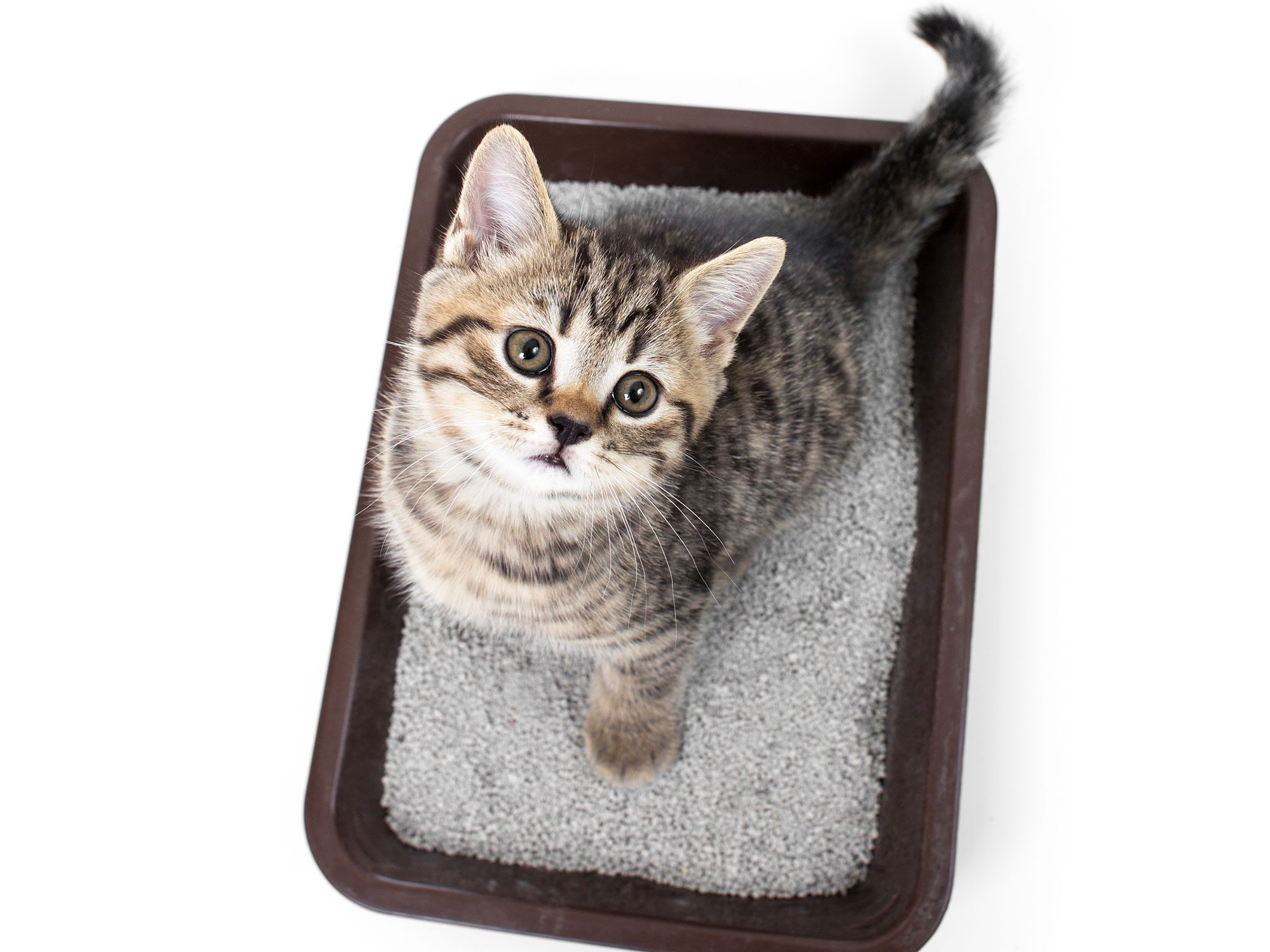 5 Clever New Uses For Kitty Litter