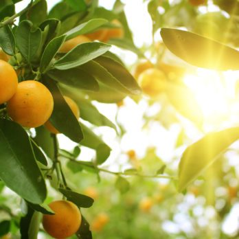 6 Things To Do with Oranges
