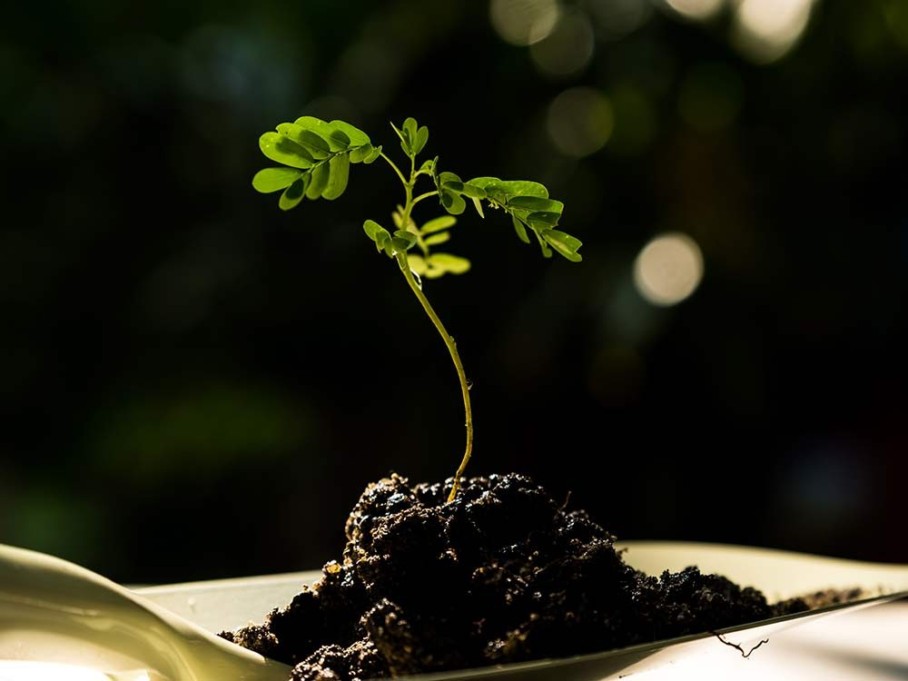 Young plant on soil over shovel