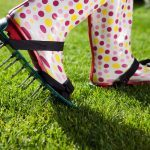 5 Secrets to Maintaining the Perfect Lawn