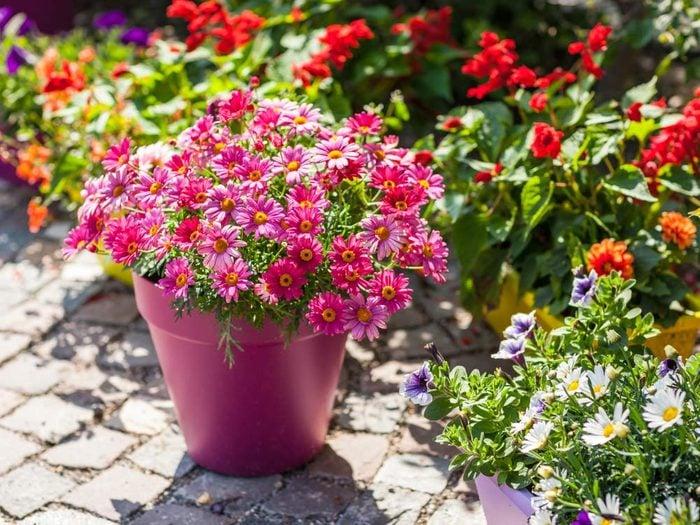 Use bubble wrap to protect patio plants