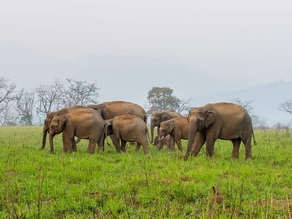 Jim Corbett National Park in India