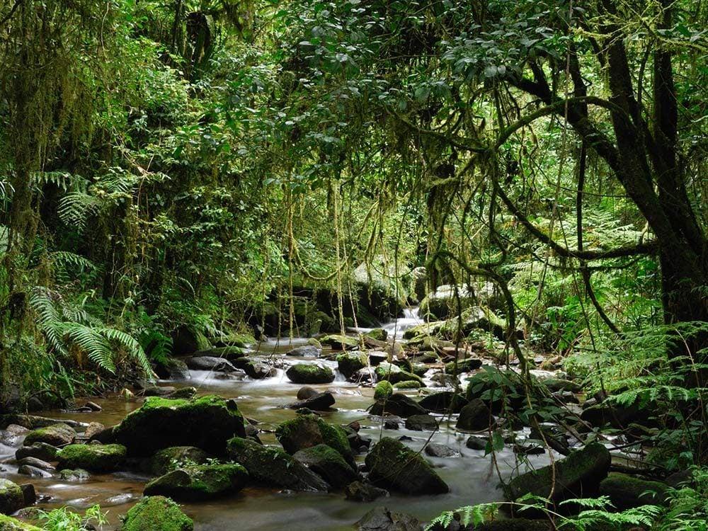 Atsinanana Rainforest in Madagascar