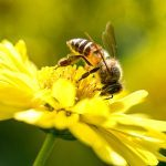 5 Facts About Bees That Are Absolutely False