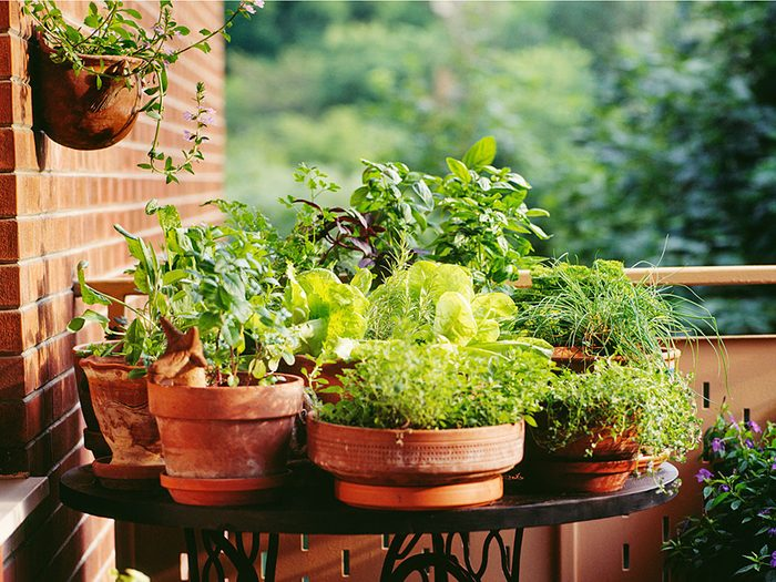 Outdoor plants on a balcony