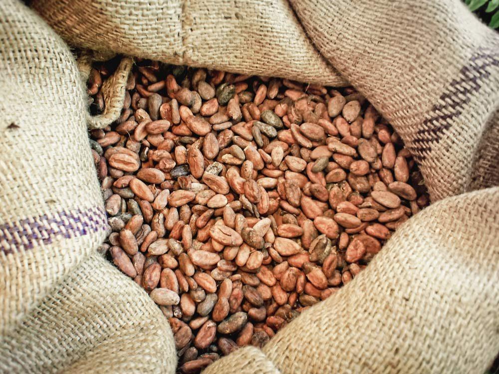 Cacao beans in Ecuador