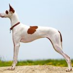 10 Awesome Dog Breeds You've Never Heard Of—Until Now