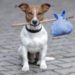 10 Tips for Safe Road Trips With Your Pet
