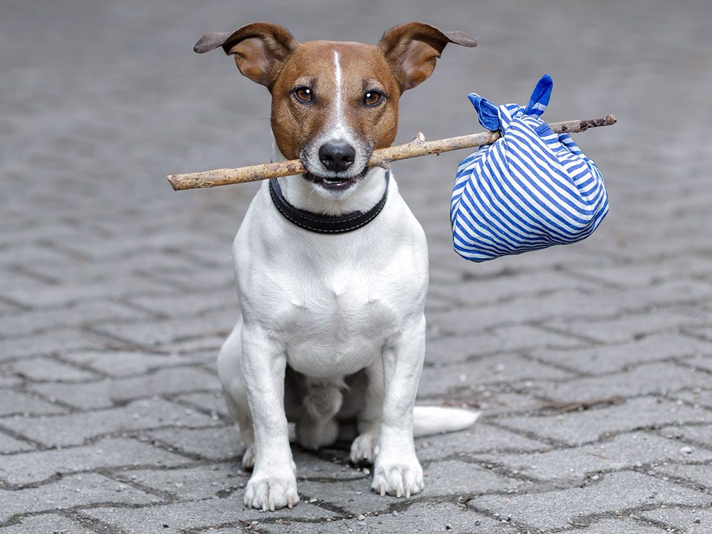 Dog ready to take a road trip