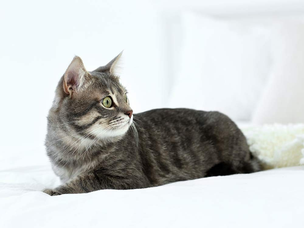 Cat lying on white bed