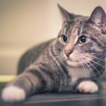 4 Strange Cat Behaviours and What They Really Mean