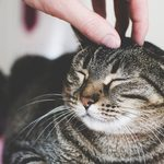 7 Tips to Make Your Cat More Friendly
