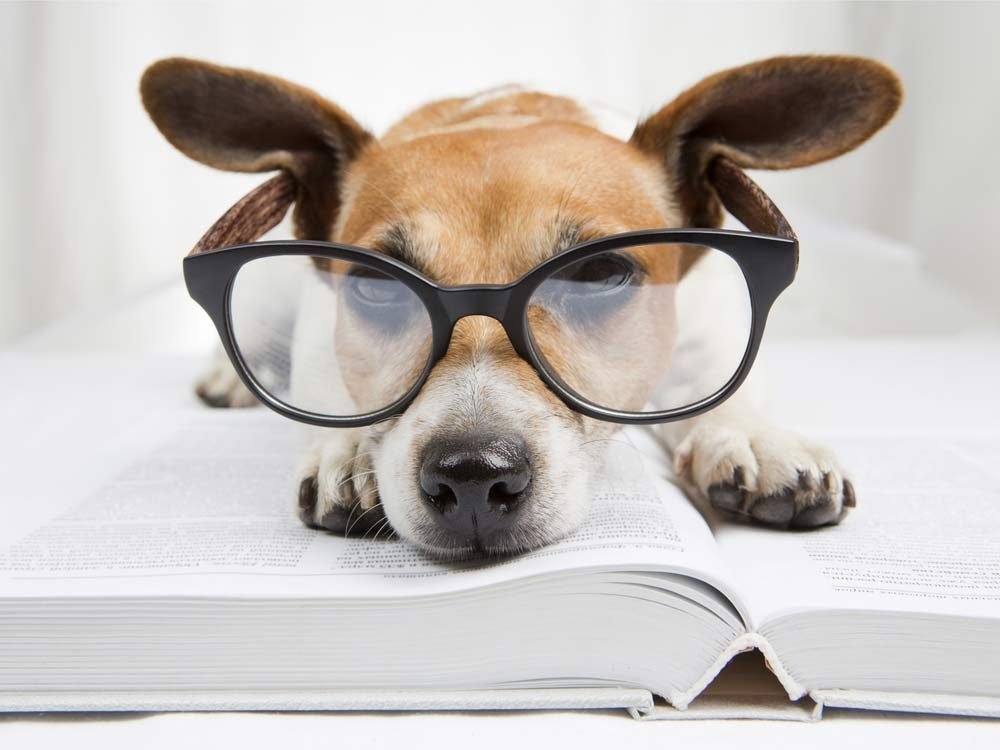 Cute dog wearing glasses