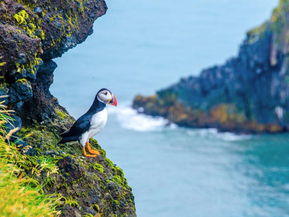 Latrabjarg bird cliffs
