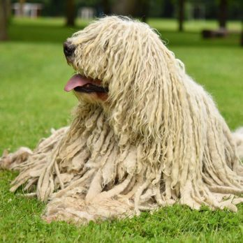 10 Strangest Looking Dog Breeds