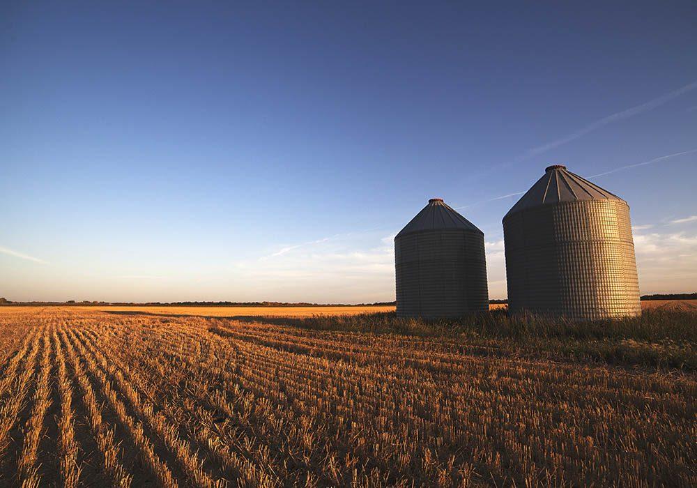 Fields in Manitoba