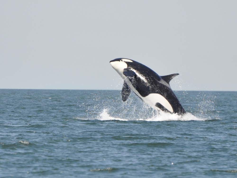 Whale watching in Victoria, British Columbia