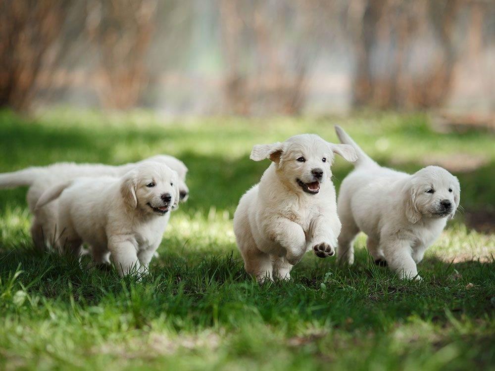 Running puppies