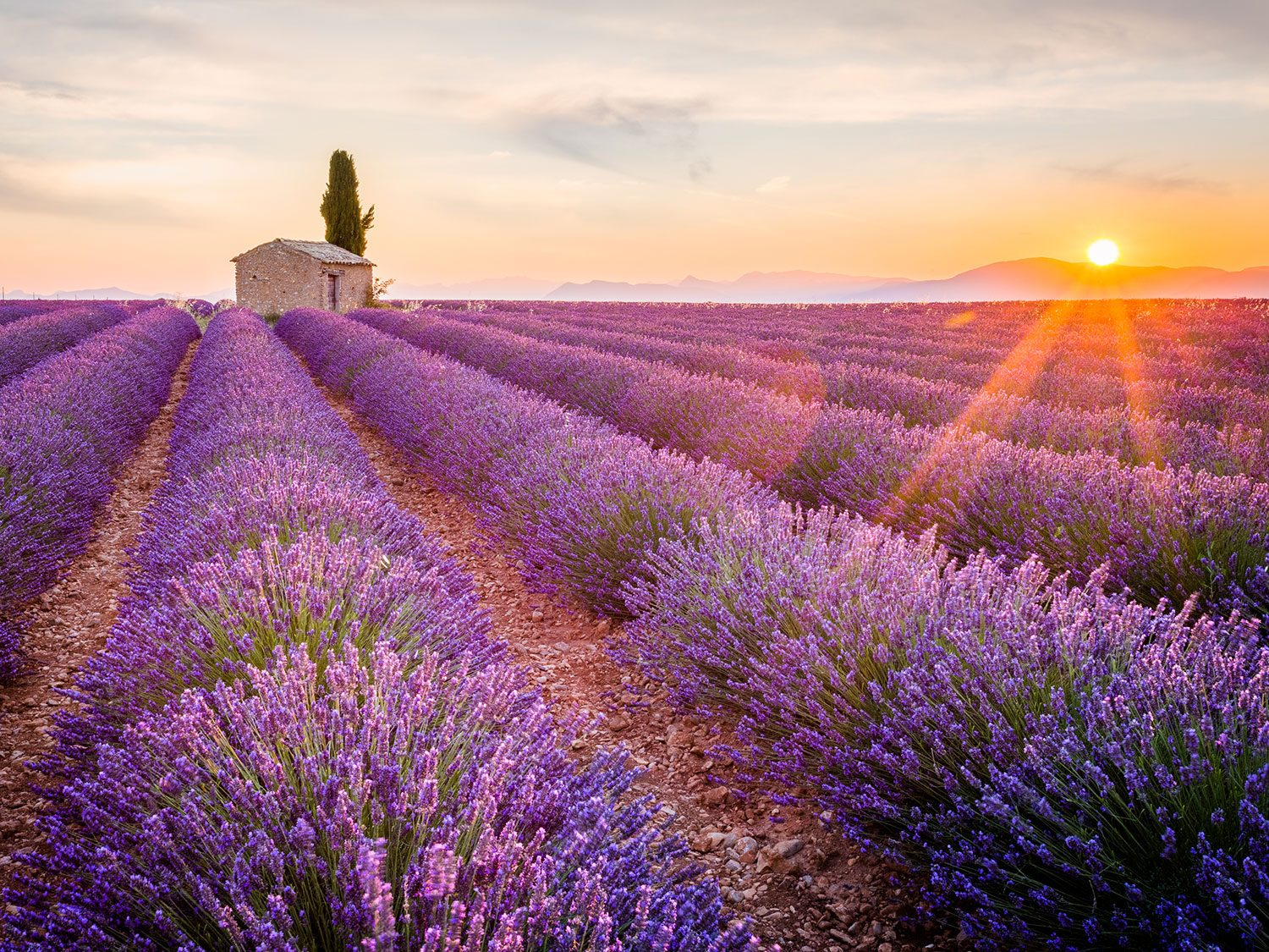 5 Healing Uses For Lavender