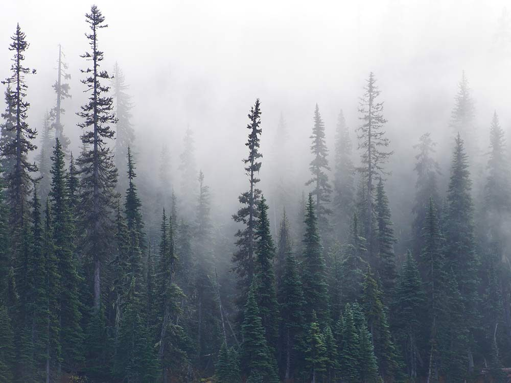 Forest in British Columbia