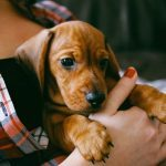 6 Things to Know Before Owning a Puppy