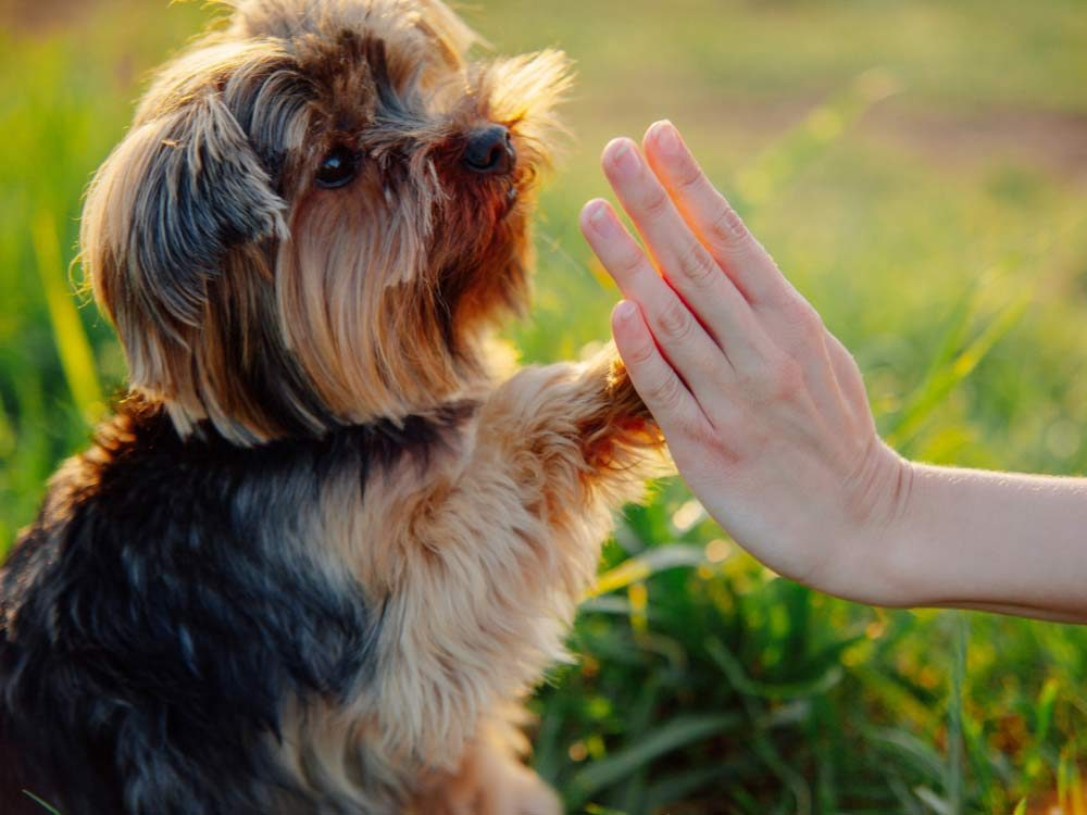Owning a Puppy Means Fostering Positive Habits