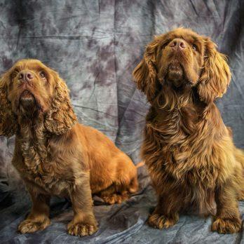 10 Least Popular Dog Breeds