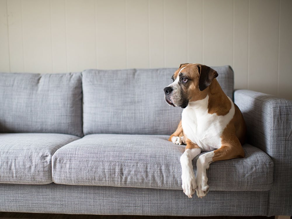 4 Ways to Get Your Dog to Stop Barking When You're Not Around