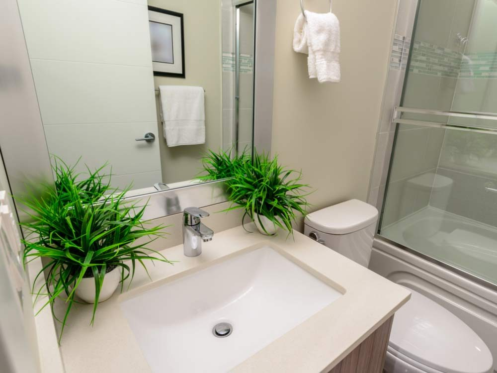 Decorative potted plants in bathroom