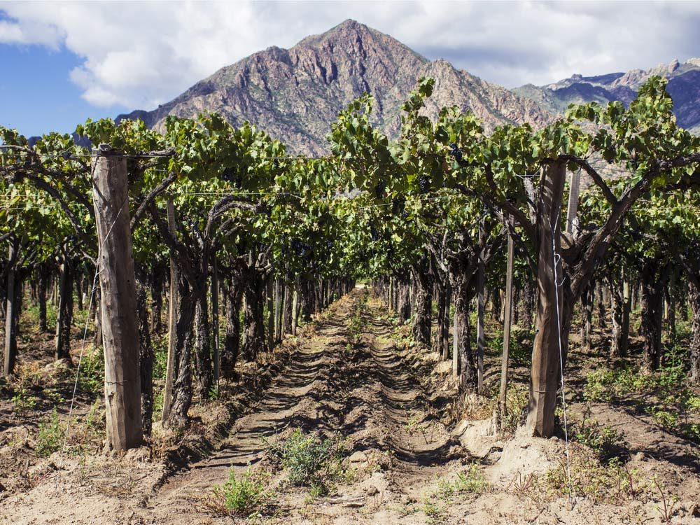 Argentina is one of the most popular wine destinations in the world