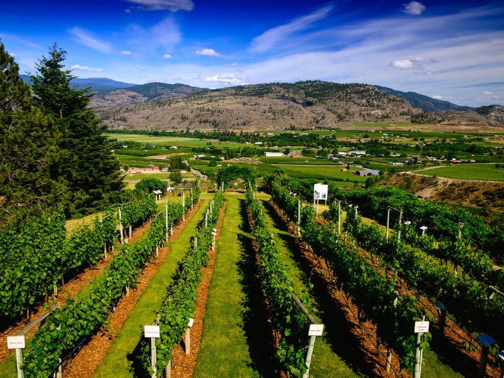Vineyard in Canada