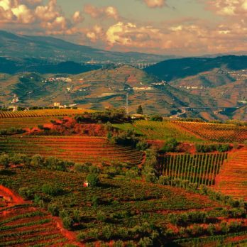 10 Most Affordable Wine Destinations in the World