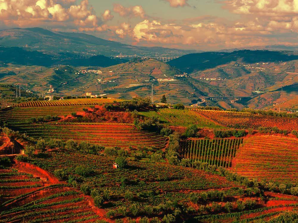 Vineyard in Portugal against sunset backdrop