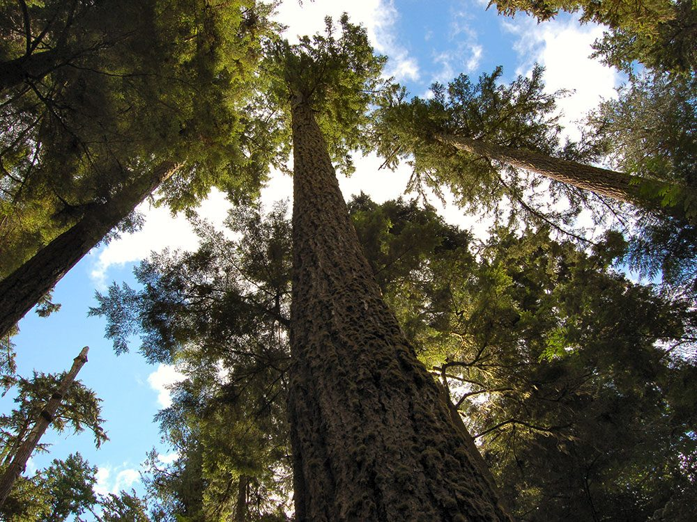 Cathedral Grove is one of Canada's natural wonders