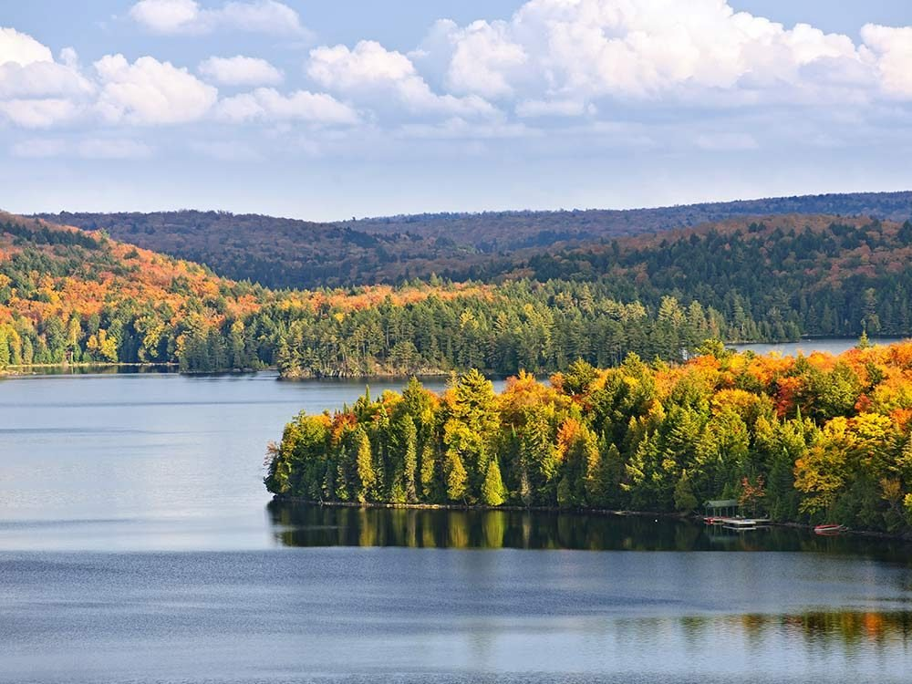 Autumn trees in Algonquin National Park