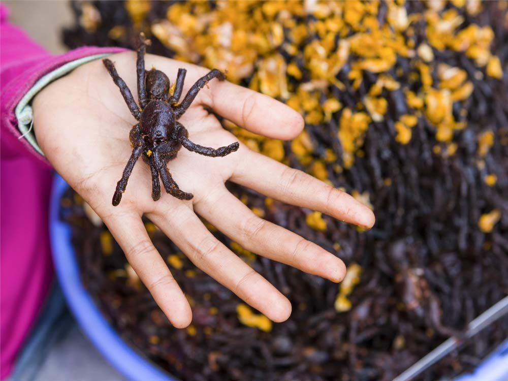 Fried spider from Cambodia