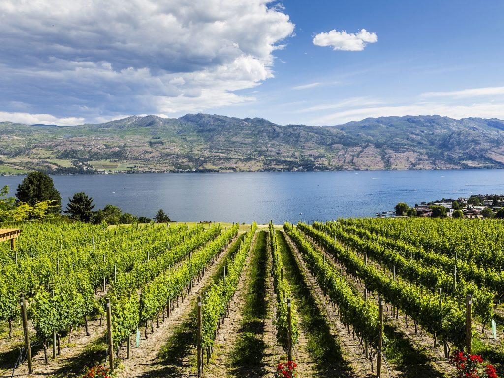 Vineyard at a winery in British Columbia's Thompson Okanagan region
