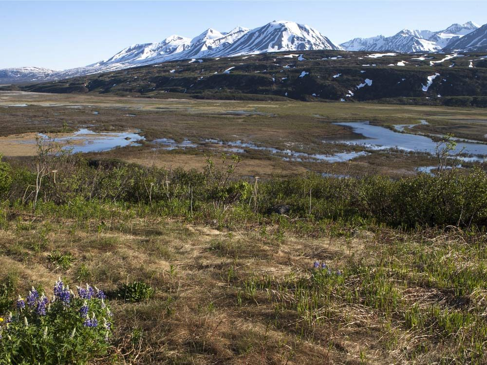 Ivvavik National Park, Yukon