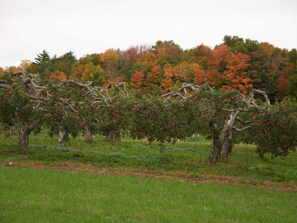 Orchalaw Farms in Ontario