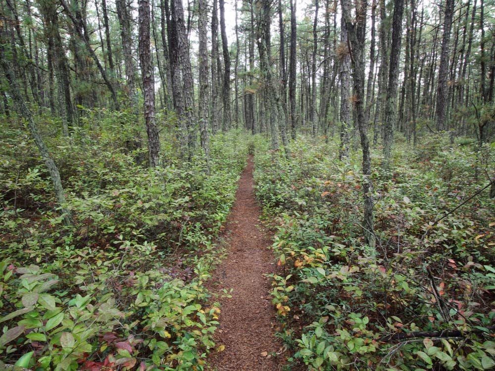 Pine Barrens, New Jersey