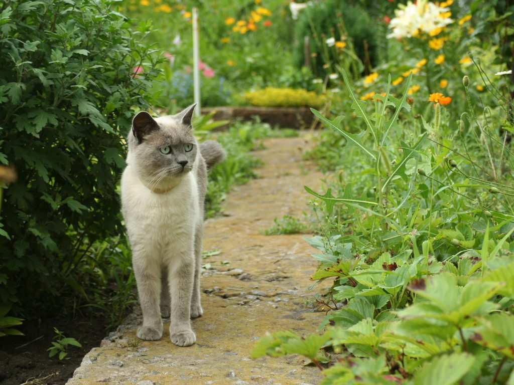 25 How To Keep Cats Out Of The Garden Decor23