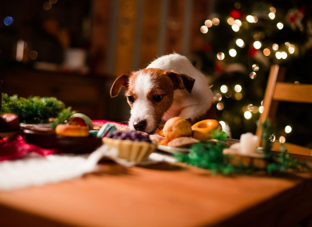 Dog on dinner table