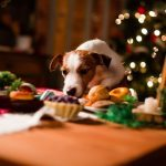 11 Unlikely Christmas Foods That are Toxic for Pets