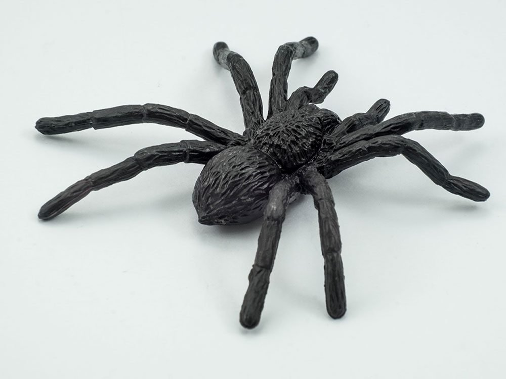 Black spider toy