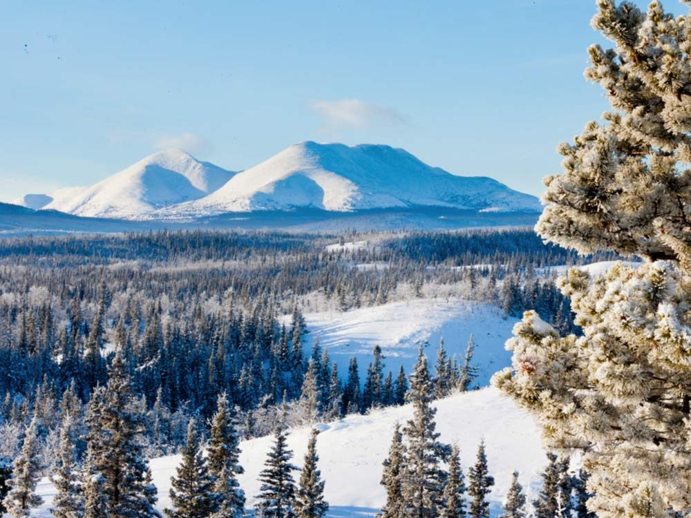 Yukon winter landscape