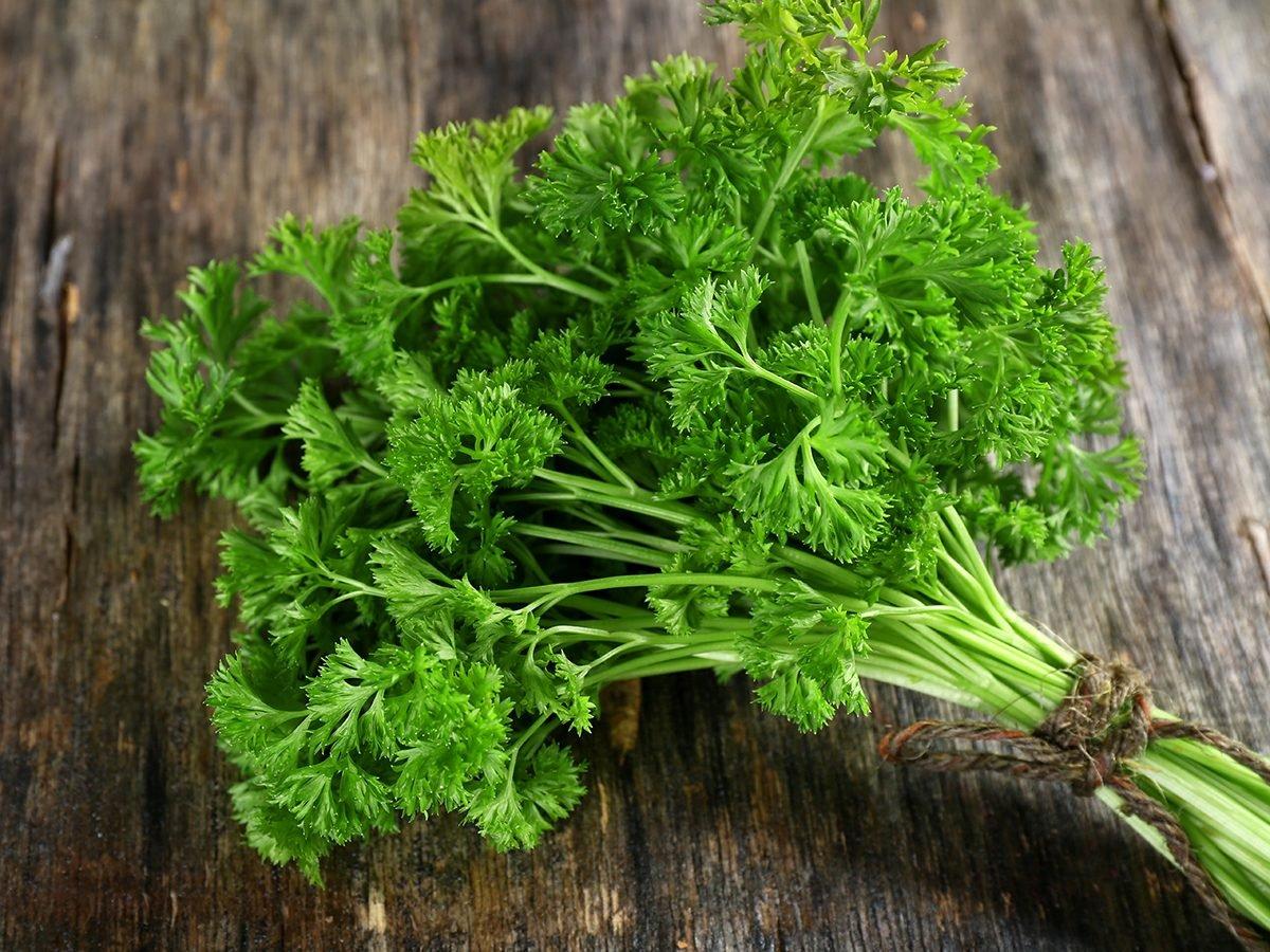 Medicinal plants to grow at home - parsley
