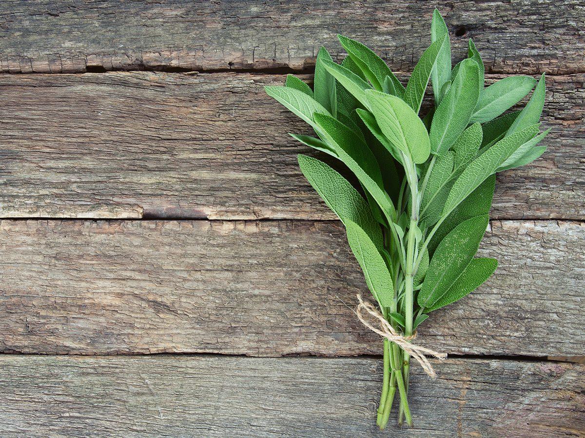 Medicinal plants to grow at home - sage